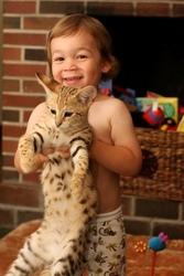 F1 Savannah,  serval and cheetah kittens for sale